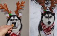 今年誰最不想過聖誕節?13張主人「強迫」臭臉毛寶貝拍聖誕卡...臭到紅遍全網!(照片+影片)