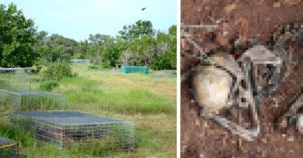 放2年自然風乾等腐爛「人屍體農場」超戰慄,大體捐贈者「想為法醫界盡心力」還得擔心被禿鷹掠食肉塊!