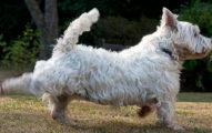 為什麼狗狗上完廁所都會「往後踢」?不是因為嫌便便髒!