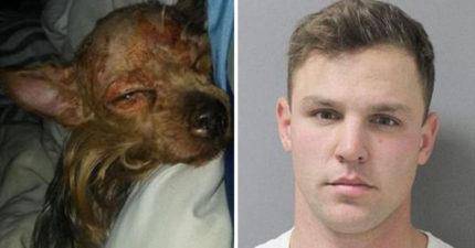 狠心男子虐待約克夏「用熱水燙狗」再關進冷凍庫,飼主在冰箱看到血跡才發現…