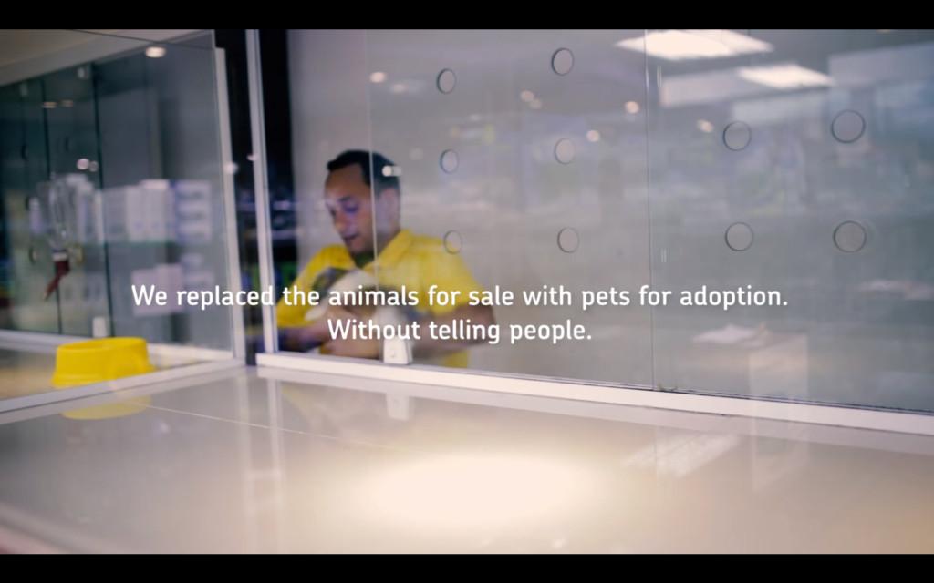 他們偷將販賣的貓狗「全換成收容所裡的」,當聽到「免費贈送」顧客學到最寶貴一課!