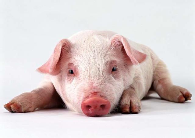阿婆到超商幫孫子買「豬肉」...店員傻眼秒懂「diva」笑噴,阿婆:死囝仔這麼貴!