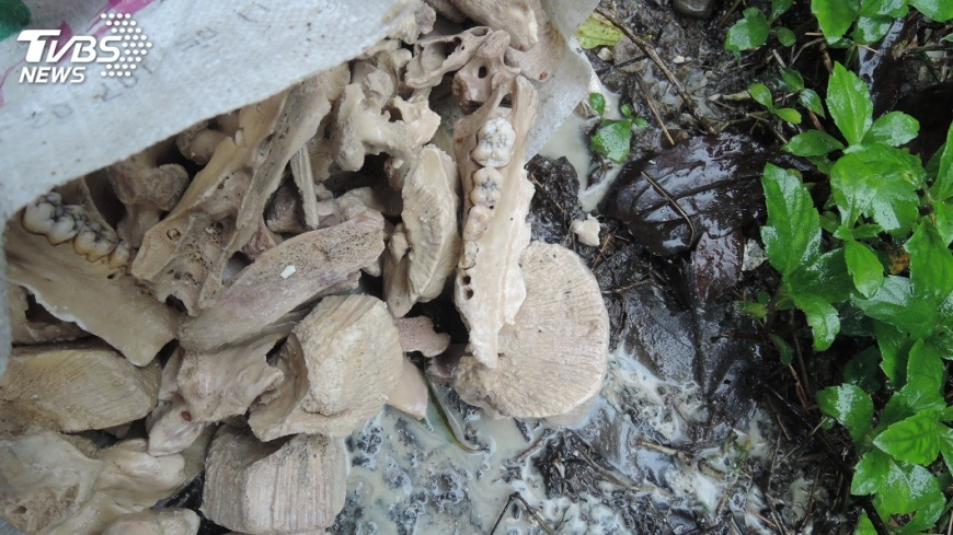 懸賞10萬緝凶!基隆郊區驚見「123袋麵粉袋」裝滿狗骨頭,疑300隻流浪狗遭「虐殺烹煮食用」後丟棄