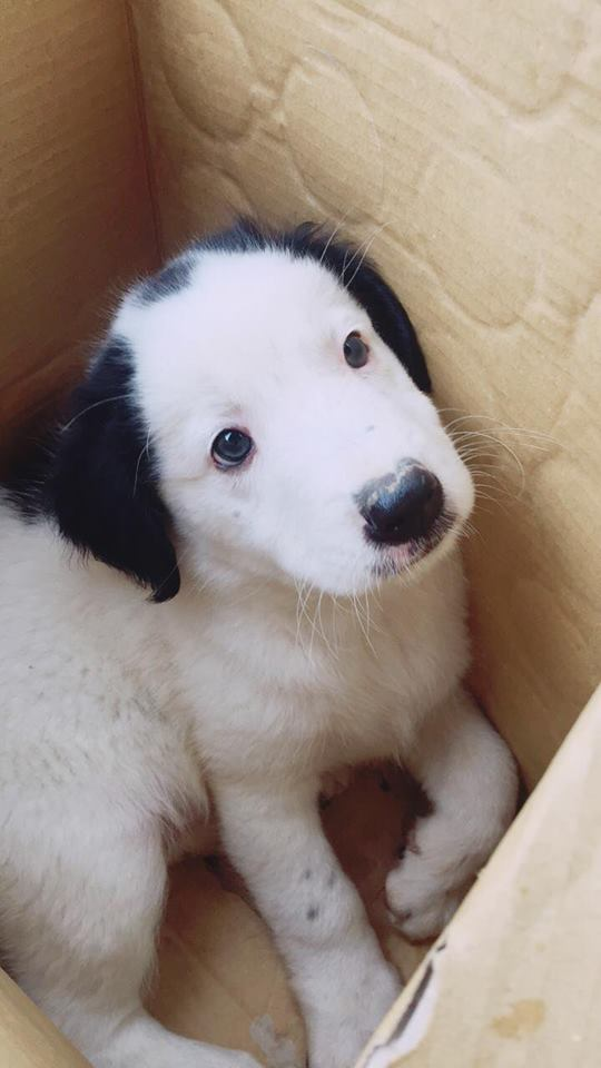 領養小狗意外撿到「史努比本尊」 抱著玩偶「熟睡畫面」超療癒