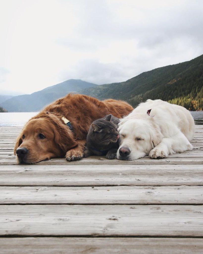 30張怎樣都分不開的超溺愛「2狗1貓」萌萌照!這就是為什麼這個組合是最棒的!