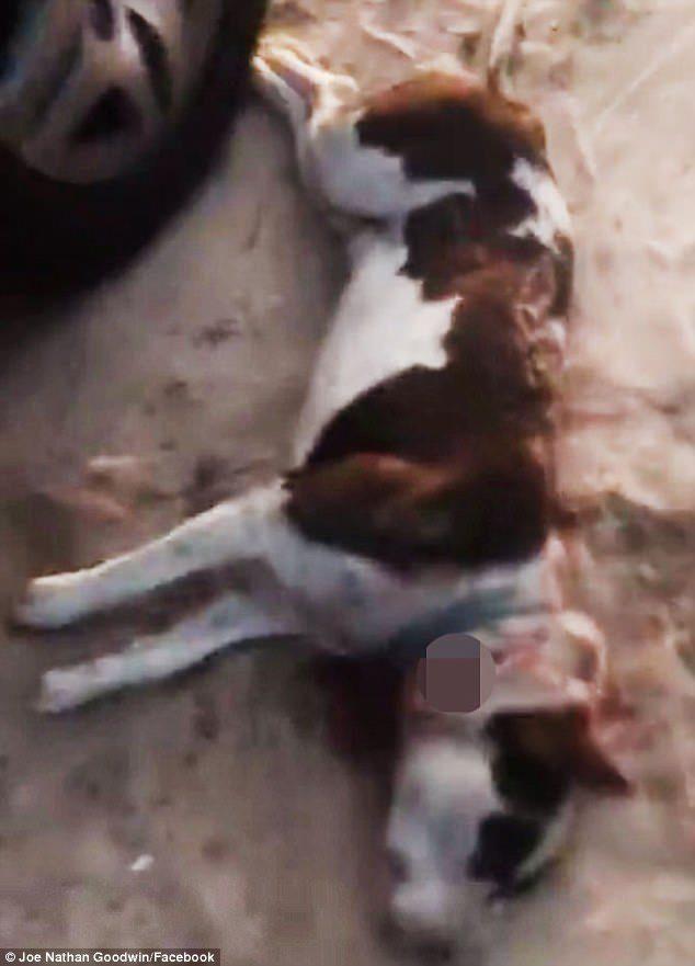 警察拿槍威脅飼主不「砍下狗頭」就要把他抓去關!