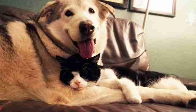 狗狗在「失去好友後」一直難過痛哭,直到家裡來了4隻小貓貓!