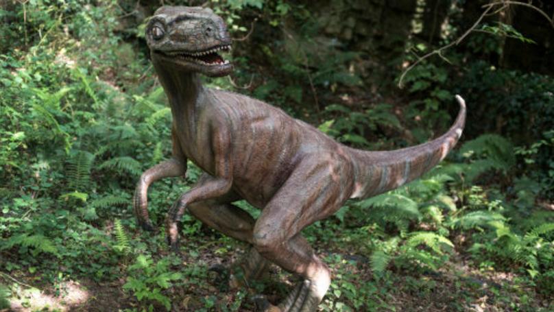 印度工人發現「神秘迷你恐龍遺骸」!保存完善「上頭還有皮肉殘餘」震驚考古學界 (影片)