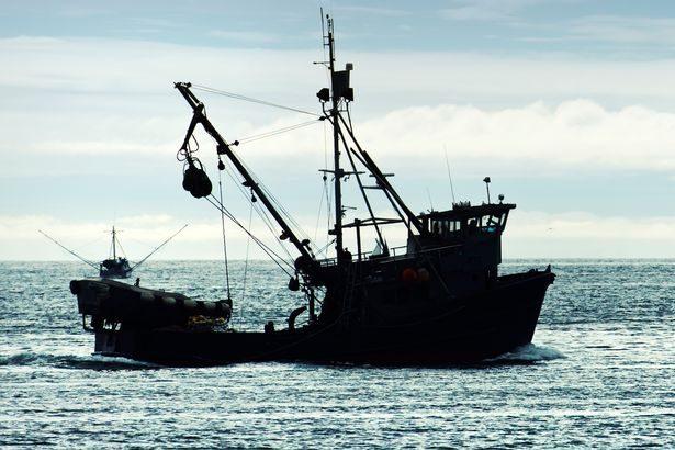 墨西哥灣黃花魚愛愛時超兇猛,「機關槍高潮」聲音大到能把海豚震聾!