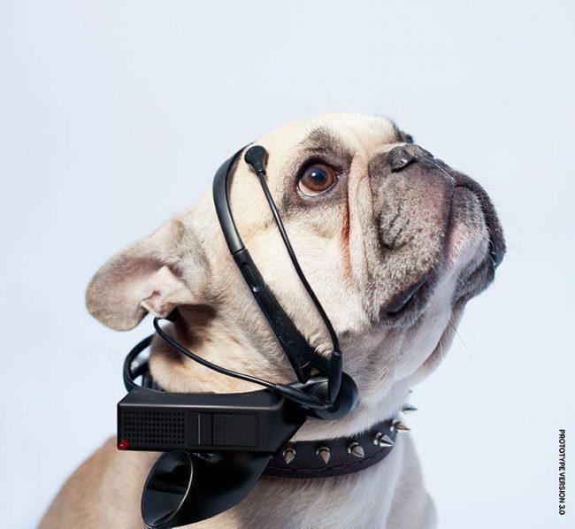 14個看之前快收好信用卡的「忍不住想敗驚奇科技小物」!和你家狗狗聊天不是夢!