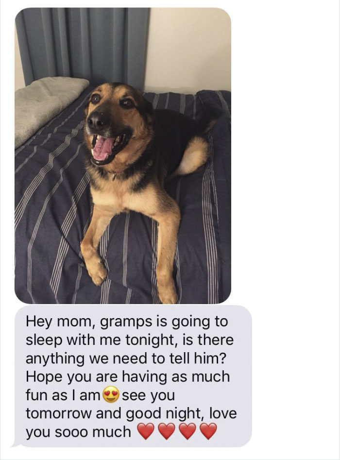 她因外出將狗兒子「託付給爸爸」照顧,接著她收到一連串「史上最溫馨有趣」的訊息!