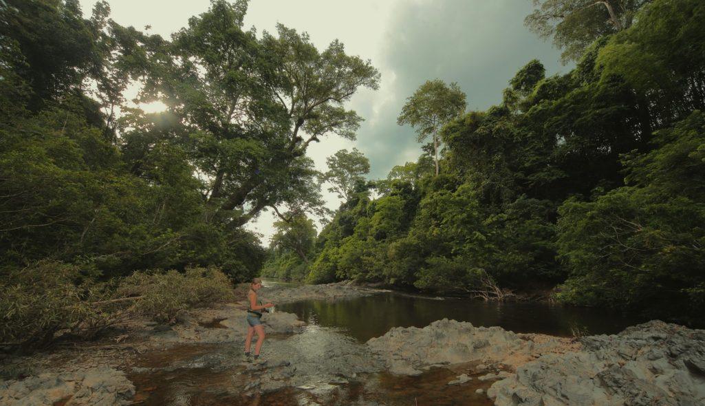 絕種130年「東方藍透翅蛾」驚現馬來西亞雨林!昆蟲學家:看到一陣藍光…