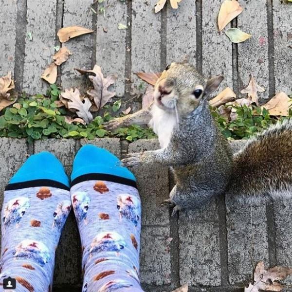 小松鼠受到中途之家「頂級照顧」,8年來「天天站窗台等恩人」生孩子後還回娘家探望!