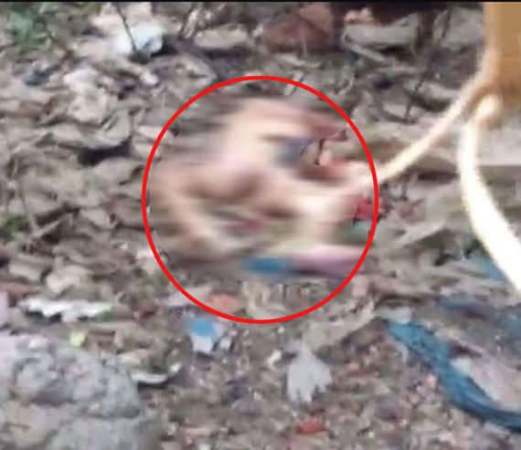監視器拍到流浪狗「從醫院偷叼新生兒」餵幼犬,全網震驚