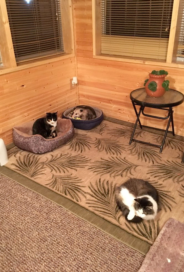 阿嬤家養超多隻流浪貓 仔細看驚覺「有小生物神偽裝」比貓皇更乖巧