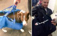 紐約地鐵開放「可攜帶寵物搭車」後,主人各種「神級攜帶方式」超爆笑!