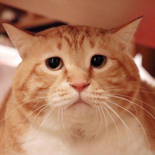 「困惑大叔臉」Guppy人氣不輸偶像!寫真集完整記錄「流浪貓變胖大叔」還送面具