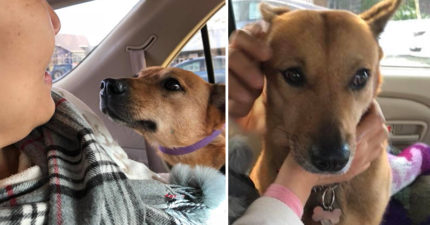 才剛送養狗就不見38天!媽媽急著飛加拿大「全靠烏鴉」找到他,見到愛犬直接抱緊處理大哭