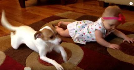天才狗狗看到小Baby還不會爬行,因此他決定自己教...
