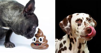 狗狗「吃便便」真正原因曝光...他為你好你還敢罵他?!