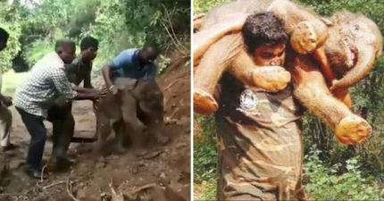 破百公斤小象受困走不動,印度男子「神力爆發扛肩上狂奔」送回母象身邊!