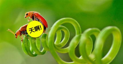 攝影師花數年「微距偷拍各種昆蟲%%模式」,蝴蝶、蚱蜢、蜻蜓都成鏡頭下主角!他:一邊飛一邊X