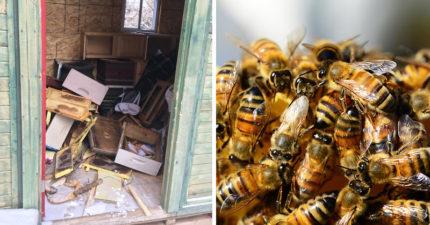 2屁孩「一夜殺死50萬隻蜜蜂」恐被判刑10年+30萬罰金!蜂園主人「損失慘重罰金不夠賠」網友看不下去出手了!
