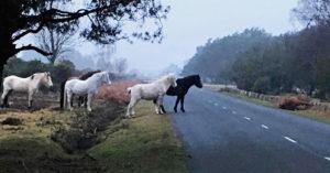 和人類一樣會心痛!小馬被超速駕駛撞死路邊,馬媽媽和同伴「站對面徹夜舉辦哀悼儀式」...