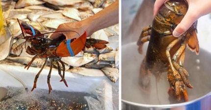 大學教授證實:龍蝦跟螃蟹都是「在強烈痛楚下死去」這樣做他們才不會痛!瑞士只好把「煮他們」變成非法!