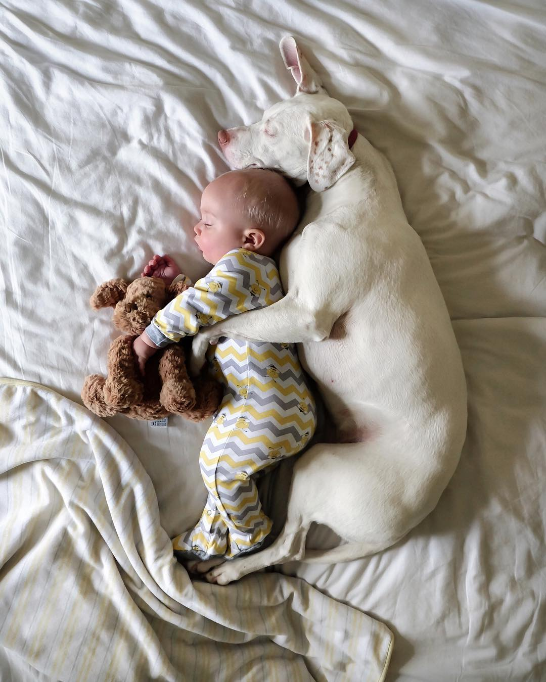 13張見證「動物有時比人類更懂感恩」的溫馨報恩照片,抱你10年也不夠!