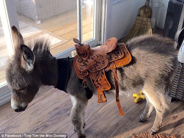 超Q小驢子出生就被拋棄,被主人接回屋內照顧後「把自己當狗狗」萌翻眾人!