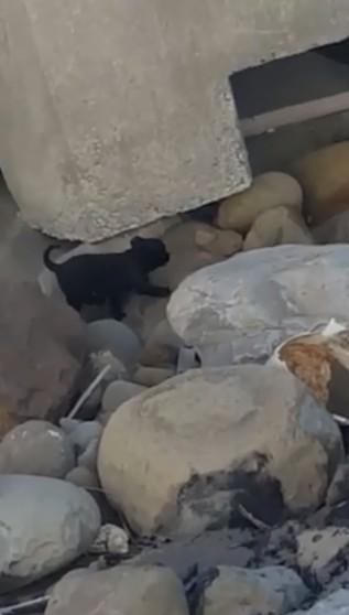 「爬上岸就帶你走!」野狼騎士海堤上遇見落魄小黑狗求救「塑膠袋直接打包」上萬網友感動:狗年會旺慘!(影片)