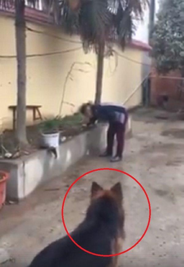 狗狗被煙火吸引撲上去,下一秒爆炸瞬間被「炸飛倒地」畫面驚悚…(影片慎入)