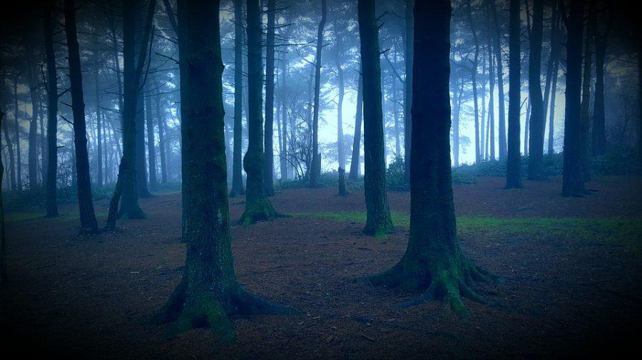 揭密日本「死亡森林」青木原樹海,想自殺進去的人沒再出來過「遺體都會消失」