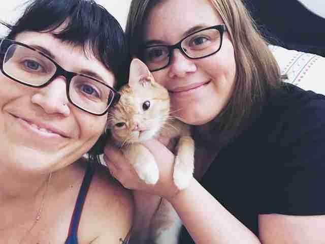 畸形小貓天生唇顎裂、眼距過開被親媽遺棄,長大後變「超可愛」找到愛她的家庭!