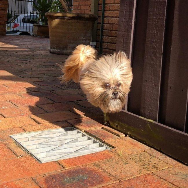 32張「多一秒少一秒都不行」的驚奇瞬間照 狗狗的身體怎麼不見了!