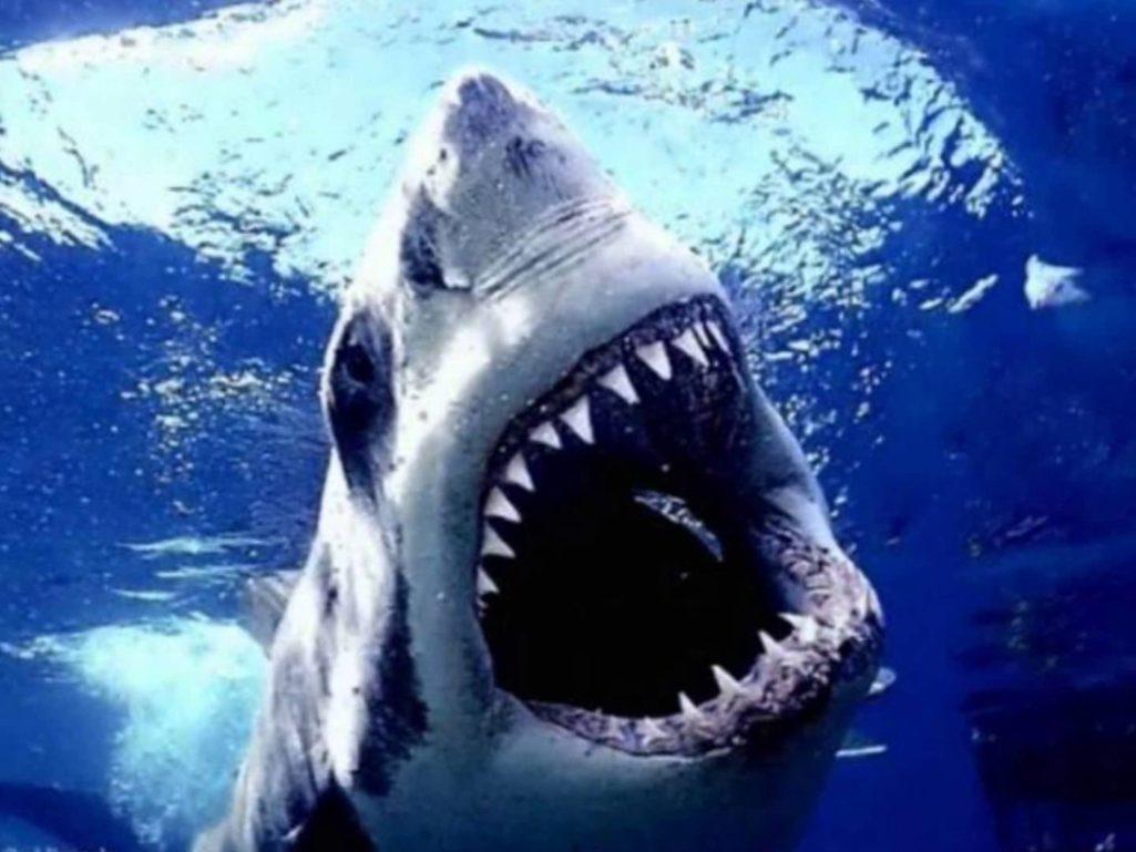 中國版魯賓遜「海上漂流133天」史上最久!他「靠手電筒釣鯊魚吃」存活:我希望沒有人必須打破我的紀錄