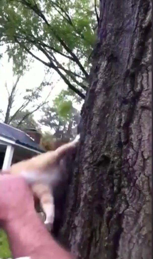 影/醫好「受傷小松鼠」讓牠重返大自然 18秒後卻慘遭「結束鼠生」