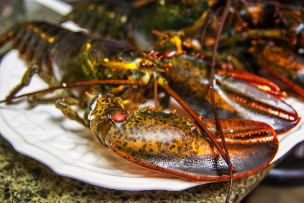 研究證實:龍蝦跟螃蟹都是「在超痛下被煮熟」!瑞士只好把「煮他們」變成非法