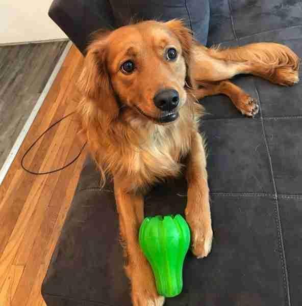 狗狗擔心主人要跟自己一樣遭受「洗澡酷刑」,每次都做出「超暖舉動」讓主人洗澡不會這麼痛苦!