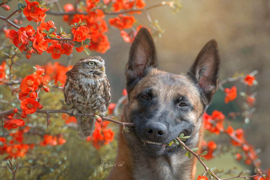真正的愛是不分種族!「狗狗+貓頭鷹」超萌互動暖照:朋友是一輩子的喔