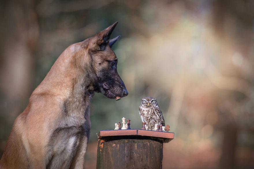 跨種族好麻吉!30+張讓你見證真正友情是不分種族的「狗狗&貓頭鷹超萌互動暖照」!