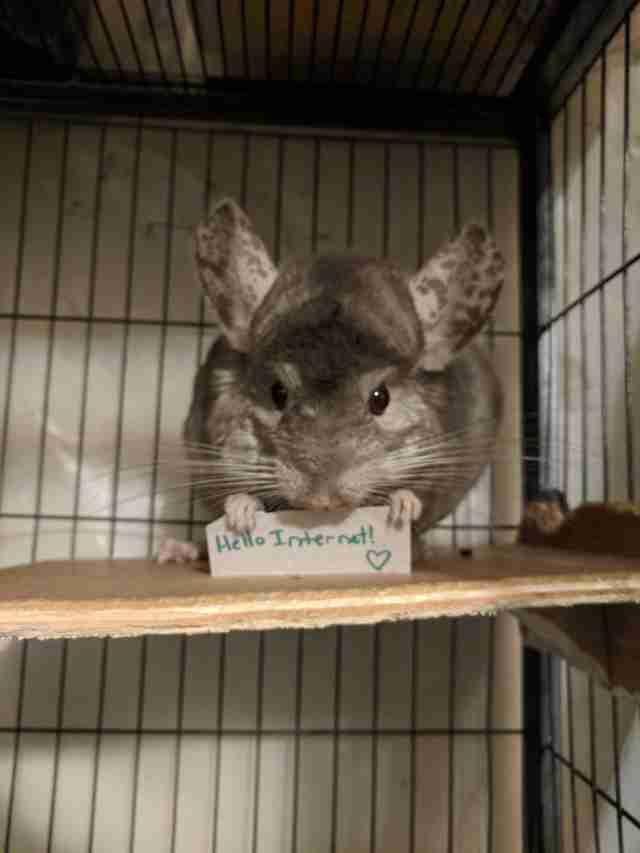 超可愛花栗鼠每天都會「舉告示標語」鼓勵媽媽,暖萌到融化!