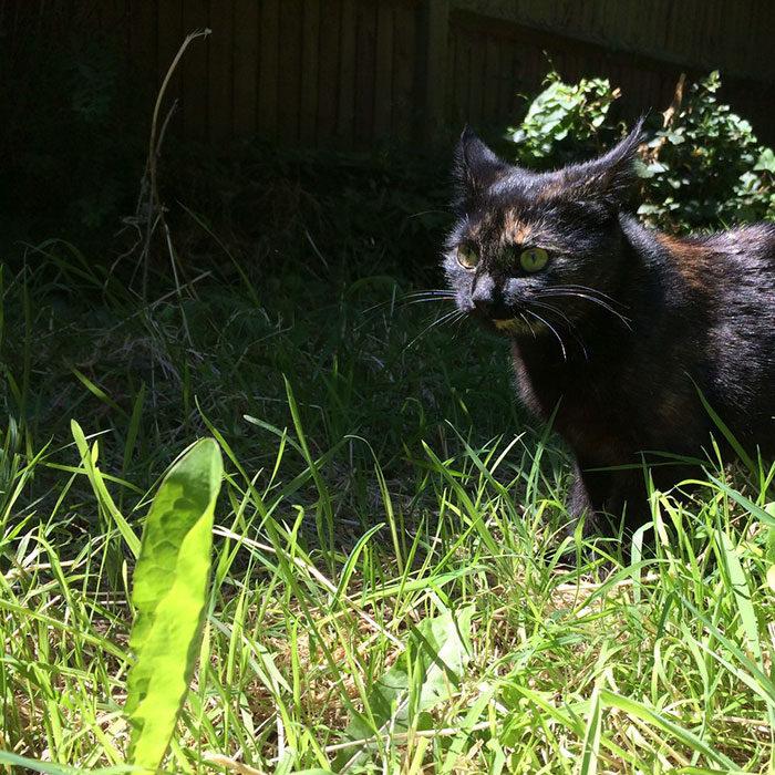 貓咪每天抓「活物」當禮物嚇壞主人,主人一睜眼看到最萌畫面...最後搞懂主人喜好才帶來「最暖新禮物」!