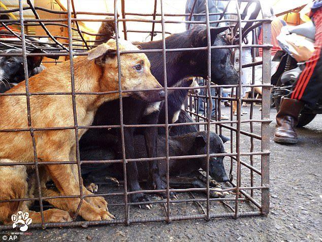 90%狗肉都是「被偷的寵物狗」!狗狗被當眾「木棒毆打+活活燒死」比地獄更可怕!(10張慎入)