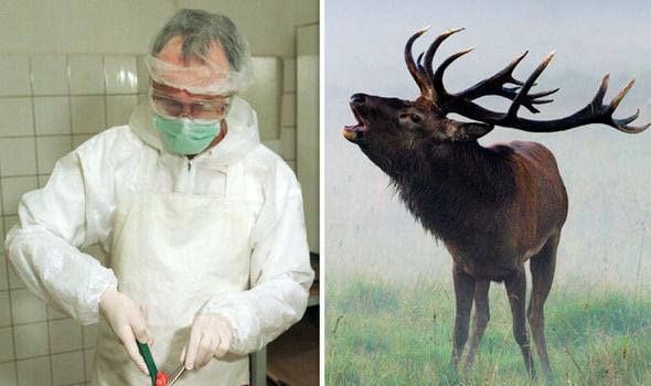 殭屍鹿侵襲北美!可怕殭屍病毒「鹿外表完好腦袋早被啃得精光」專家憂:有天恐感染人類