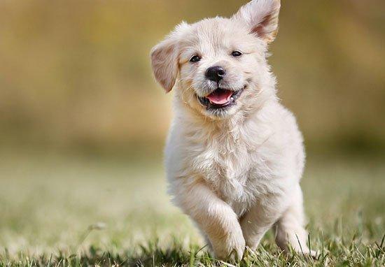 研究發現狗狗「更容易服從女生」,因為男生根本就不夠體貼!