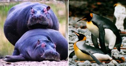 15種動物的超恐怖「虐殺片般交配方式」讓你明白自己實在太性福。#13 必須嘔吐在對方嘴裡...