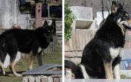 忠犬11年來堅持「每晚守在主人墳墓旁」被帶回家又偷偷衝回墓地!如今「終於跟主人團圓」...