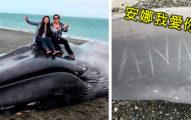 20公尺巨大藍鯨擱淺,民眾趕現場「爽坐屍體燦爛合照」還有人「趁機刻字告白」!引爆全網公憤